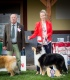 Collie rough - Lenka and Belmondo in show ring